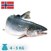 سمك سالمون نرويجى الحبه من4-5