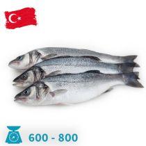 سمك سيباس تركيا 600-800