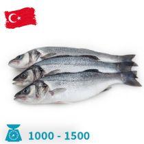 سمك سيباس تركى 1000-1500